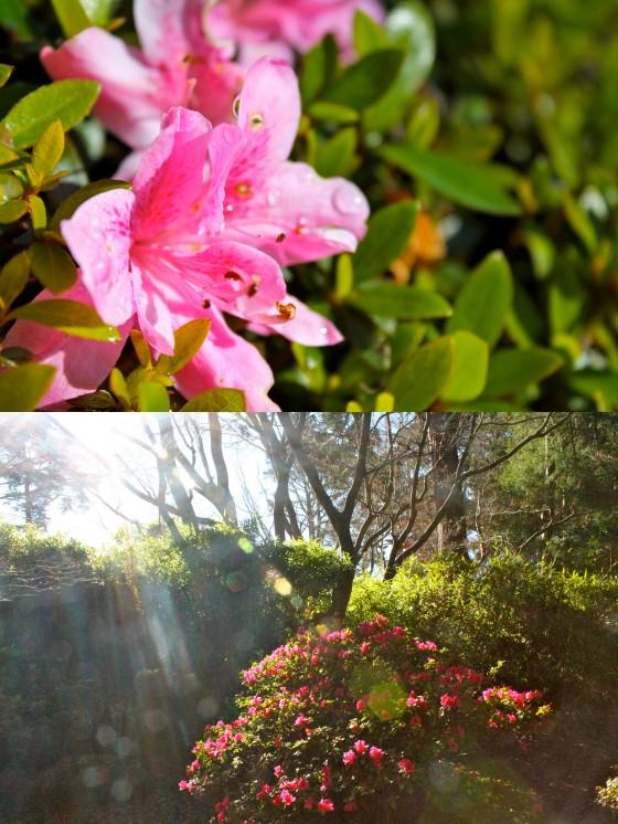 blog tea garden1