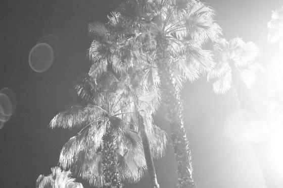 foggydress_temptee