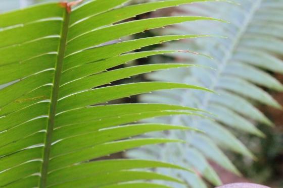 foggydress_plants